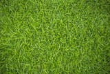 Grass top view - 110058303