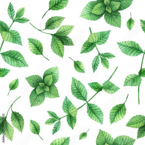 Fototapeta Watercolor vector seamless pattern hand drawn herb mint .