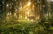 Hirsch in nebligem Wald - 110070777