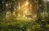 Hirsch in nebligem Wald © lassedesignen