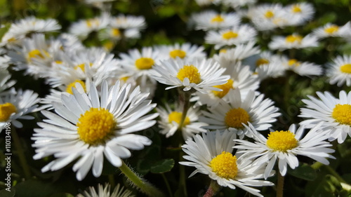 Zdjęcia na płótnie, fototapety, obrazy : Flowerfield