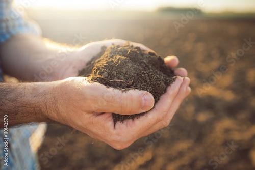 Foto Murales Handful of arable soil in hands of responsible farmer