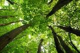 foresta verso il cielo