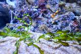 Seahorse in marine aquarium