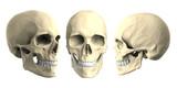 human skulls isolated on white background