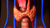 Thyroid gland
