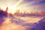 Winter sunset in the forest landscape