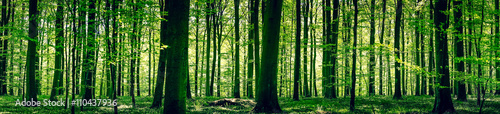 Idyllic forest in the springtime - 110437936