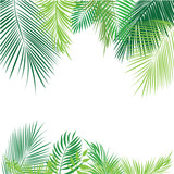 Tropical jungle background with palm tree and leaves.  - 110444575