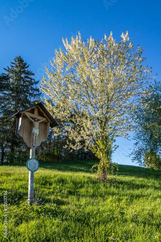 Zdjęcia na płótnie, fototapety, obrazy : Marterl auf einer Wiese neben blühenden Bäumen