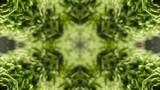 万華鏡.苔.緑.4k