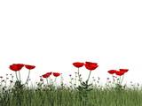 Poppies - 3D render
