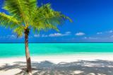 Single vibrant coconut palm tree on white tropical beach of Mald - 110568117