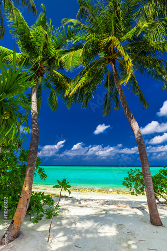 Two palm trees framing a beach entrance to tropical blue lagoon