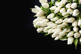 Set of fresh white tulips on black background. Top view High quality photo with space for text. Studio isolated. Ideal for commercial