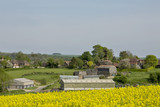 Farmstead. A farm in the English countryside highlighted in the foreground by a crop of canola. The green rolling hills of England continue behind the farm buildings.