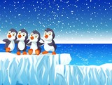 four penguins standing on the snow