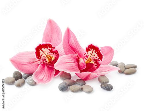 Orchid flowers - 110674539
