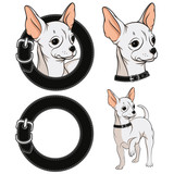 Set of color illustrations with a Chihuahua in a collar. Vector isolated objects.