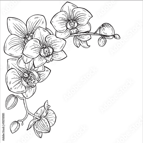 Beautiful monochrome vector illustration with orchid branches