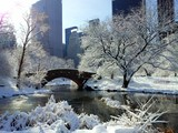Central park in early winter morning