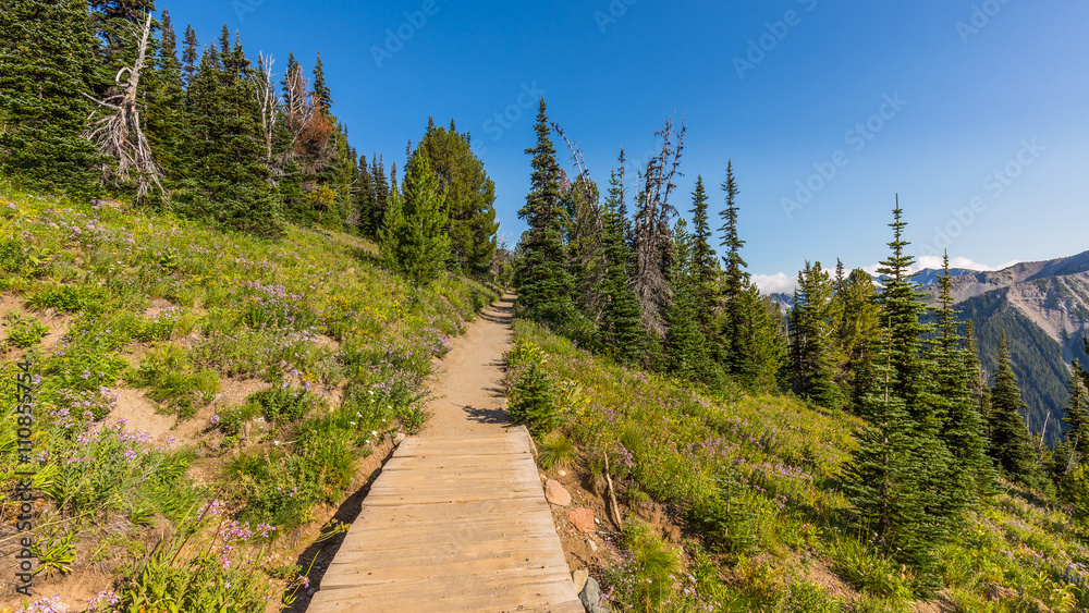 Summer landscape in mountains. Mount Rainier, Sunrise Area SHADOW LAKE TRAIL