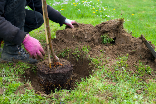 Zdjęcia na płótnie, fototapety, obrazy : Baum pflanzen