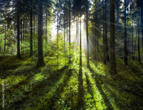 Zdjęcia na płótnie, fototapety, obrazy : Grüner Wald im Sommer mit Sonnenstrahlen