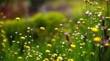Spring Flowers 08 Lavendars