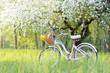 spend a weekend in nature/retro bicycle picnic under a blossoming tree in the Spring  - 111057762