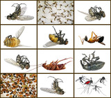 Dead insects. Macro. Isolated on a white background