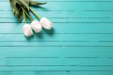 Tulipss flowers