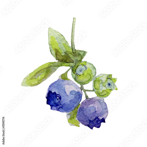 Poster Blueberries with leaves, watercolor illustration