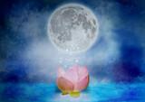 光と蓮と月