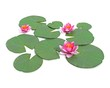 3d illustration of a water lily
