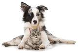 Hund und Katze - Fine Art prints
