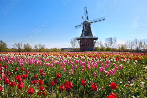 Wooden Windmill in Holland Michigan - Surrounded by spring tulips Poster