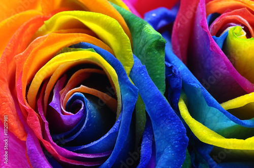 Staande foto Roses Rainbow rose or happy flower