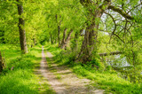 Weg Glaube Pfad Natur Wald Bäume