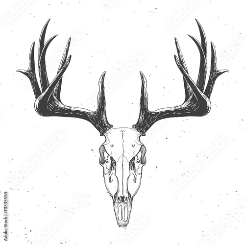 deer skull on white