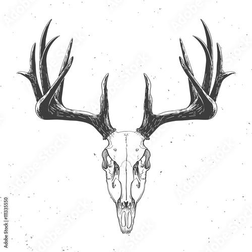 deer-skull-on-white
