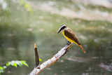 El pájaro en el tronco mira el agua del lago.