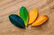 Season change of leaves
