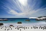 The penguins at Boulder