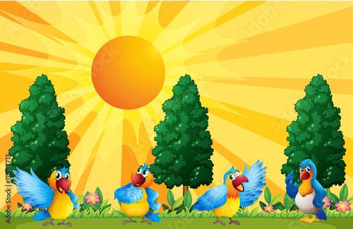 psotne-papugi,-zwierzeta,-rysunek,-bajki