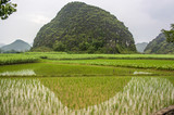 Green rice paddy fields with oddly shaped Karst mountains in the background at Yangshuo, near Guilin, Guangxi province, China