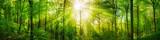 Fototapety Wald Panorama mit grünen Buchen und schönen Sonnenstrahlen
