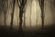 old trees in dark forest