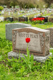 "Headstone in a cemetery with one red tulip and ""rest in peace"" inscription"