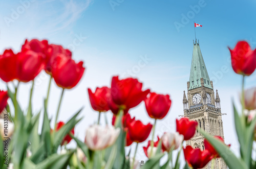 Aluminium Canada Peace Tower of Parliament building at Ottawa during Ottawa Tulip festival.